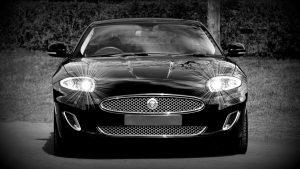 jaguar-1366978_1920